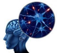 porn-brain1-e1351034070400